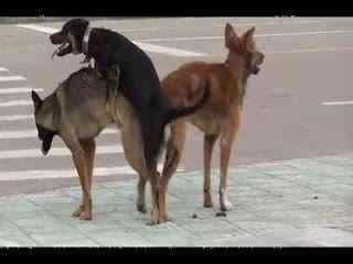 狗猩交配视频_动物配种狗配猪 人与马羊狗猪 动物性生行为猪 - 爱知中国网