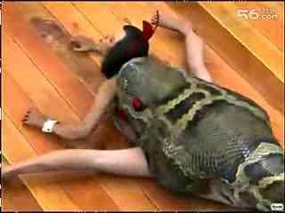 恐怖的巨蟒吃人视频